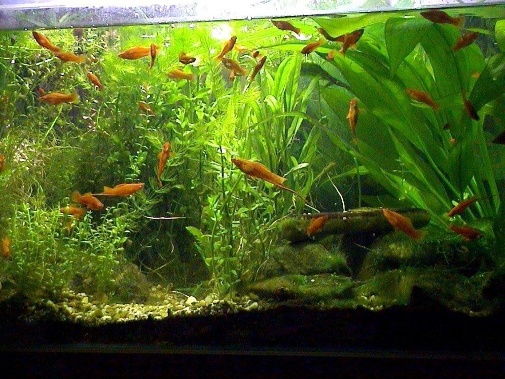 Ujas welt entwicklung des 250l aquariums im ersten jahr for Aquarium goldfische